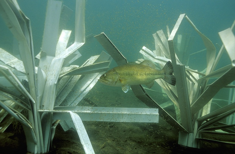 Fishiding Structures
