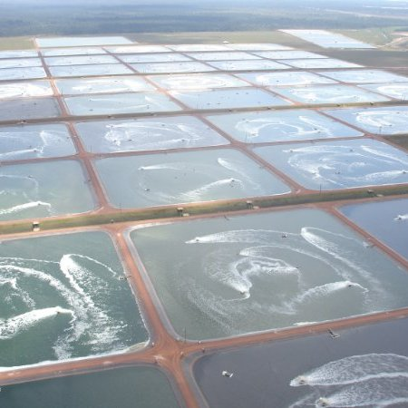 Belize Aquaculture.jpg