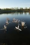 fishiding fish attractors