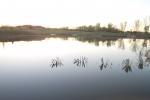Kelsay lake habitat