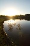 Nebraska habitat at sunset