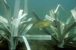 Fishiding Structures
