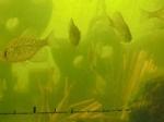 Cradle habitat in Fish Fry Lake