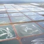 Belize Aquaculture.jpg