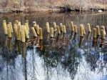 stakes for bass and crappie habitat