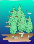 artist rendition of fish habitat